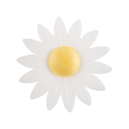 flower white daisy 000/ 6 a7